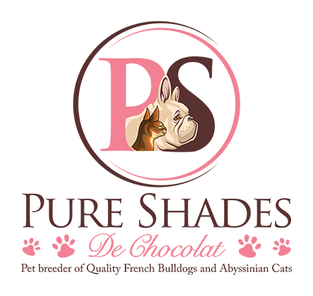 Pet breeder of Quality French Bulldogs and Abyssinian Cats